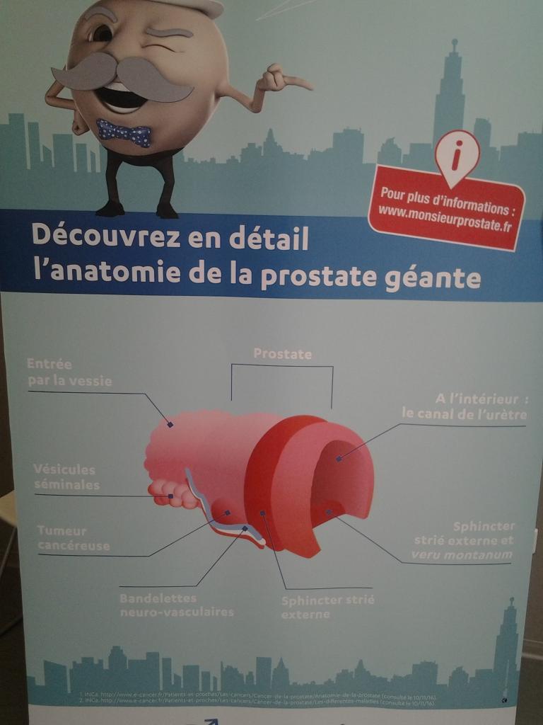 Affiche anatomie de la prostate.